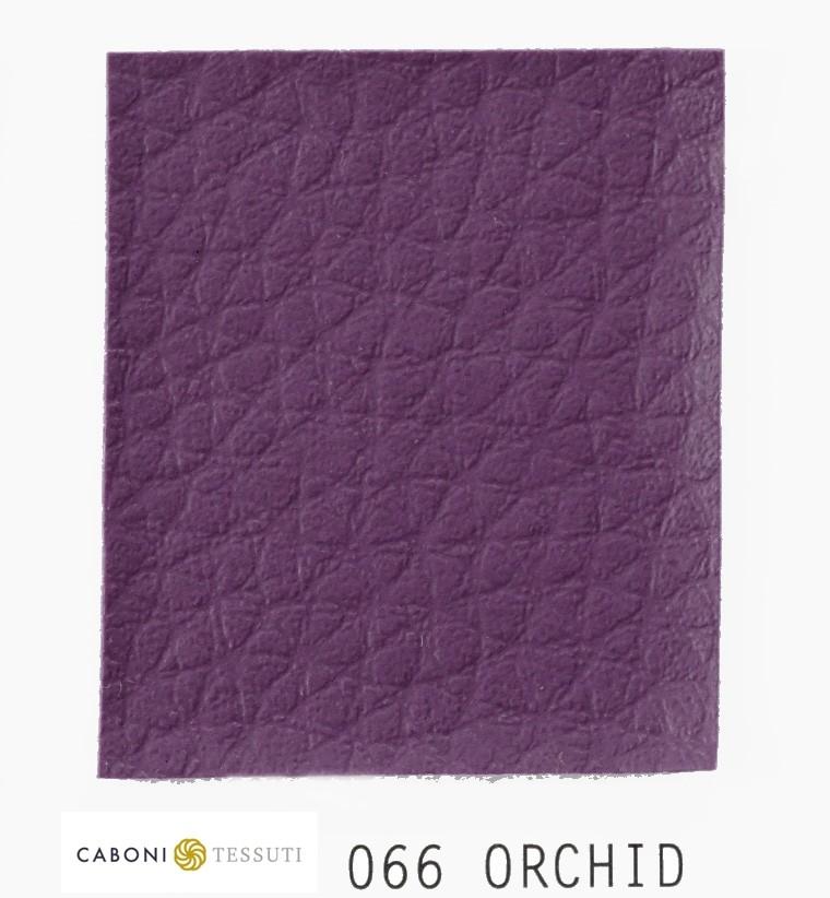 066 Orchidea